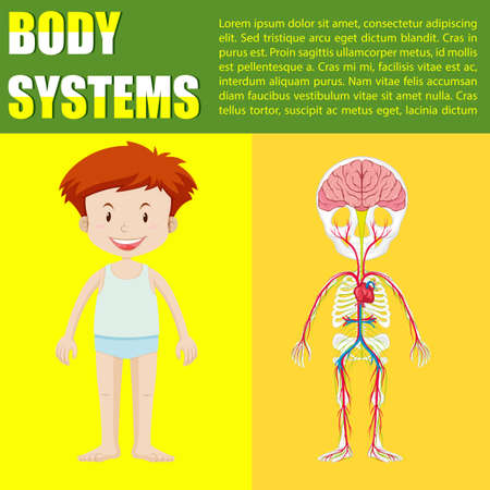 x xray: Infographic body system of boy illustration
