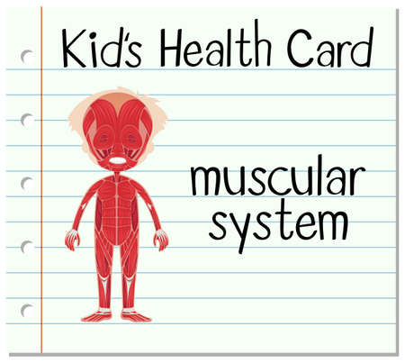 muscular system: Health card with muscular system illustration Illustration