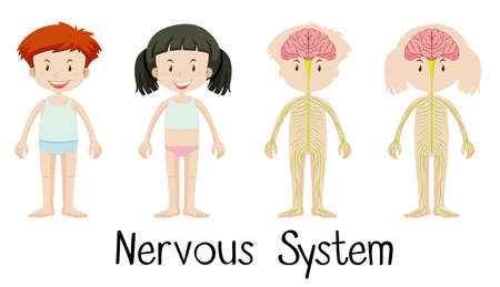 x ray image: Nervous system of boy and girl illustration Illustration