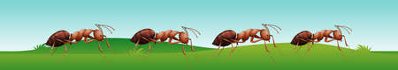 colony: Four ants walking on the grass illustration