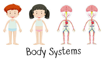 x ray image: Body systems of boy and girl illustration Illustration