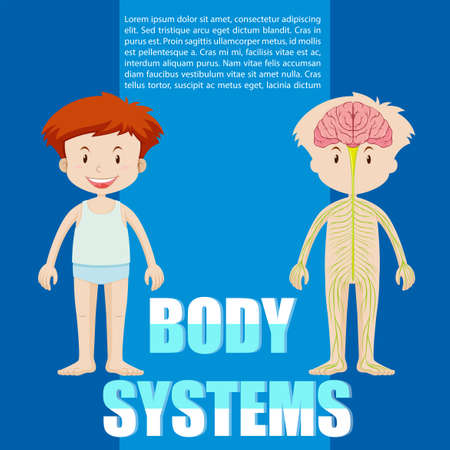 cartoon human: Infographic of boy and body system illustration Illustration