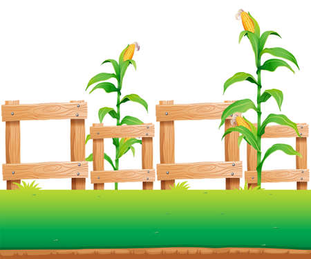 agriculture wallpaper: Seamless background with corn and fence illustration