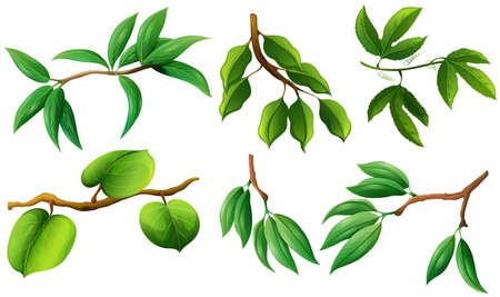 Different type of leaves on branch illustration