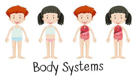 body image: Children and body systems illustration