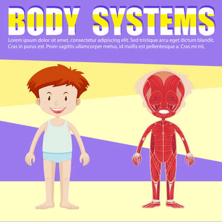 x ray image: Infographic of boy and body diagram illustration