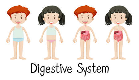 Boy and girl with digestive system illustration Illustration