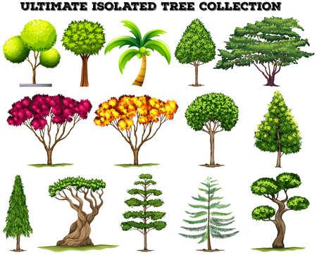 arboles caricatura: Última aislado conjunto ilustración recogida de árboles Vectores