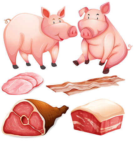 carnivorous: Pig and pig products illustration