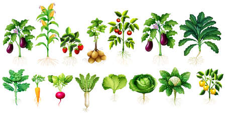 tomatoes: Many kind of vegetables with leaves and roots illustration