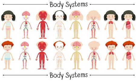 sistema del cuerpo de chico y chica ilustración