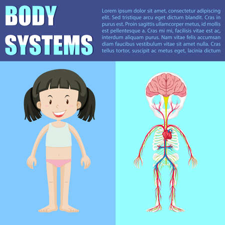 x ray image: Body system diagram of girl illustration Illustration