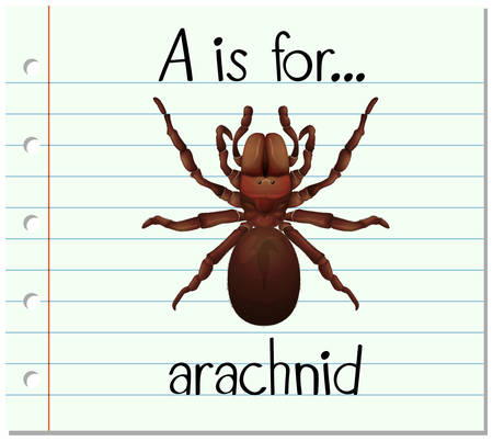 arachnid: Flashcard letter A is for arachnid illustration Illustration