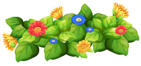 bush: Green leaves with colorful flowers illustration Illustration