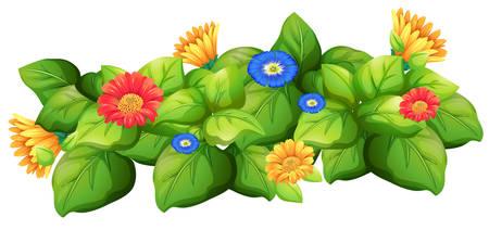 buisson: Les feuilles vertes avec des fleurs illustration colorée Illustration