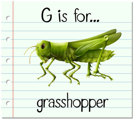 hopper: Flashcard letter G is for grasshopper illustration