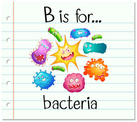 b cell: Flashcard alphabet B is for bacteria illustration