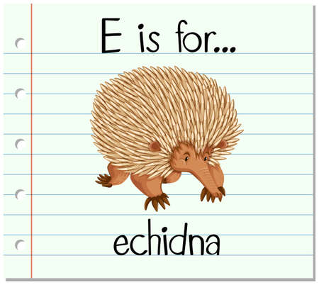 echidna: Flashcard letter E is for echidna illustration Illustration