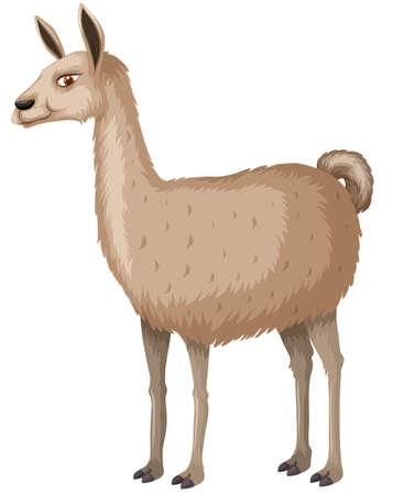 llama: Llama with happy face illustration