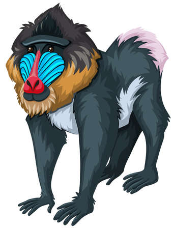 baboon: Baboon with happy face illustration