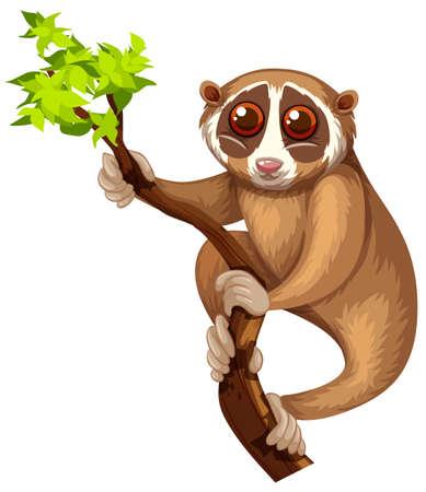wild living: Wild loris on the branch illustration Illustration
