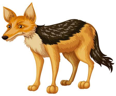Coyote auf weißem Hintergrund Illustration