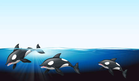 orcinus: Whales swimming under the sea illustration