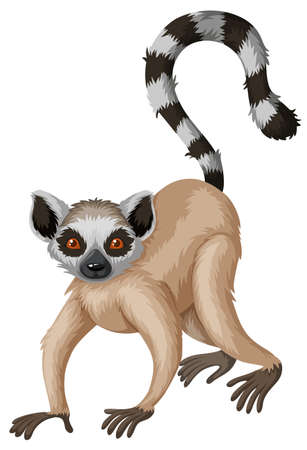 meerkat: Meerkat with long tail illustration