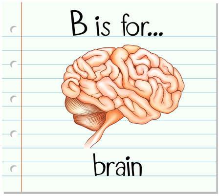 body writing: Flashcard alphabet B is for brain illustration