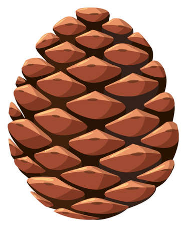 Close up of pine cone illustration