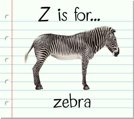 letter z: Flashcard letter Z is for zebra illustration Illustration