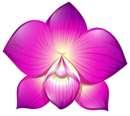orchid: Orchid in purple color illustration