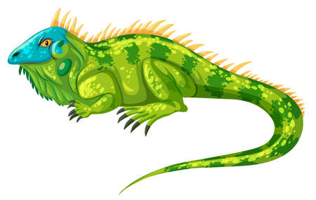 isolated animal: Green iguana crawling alone illustration