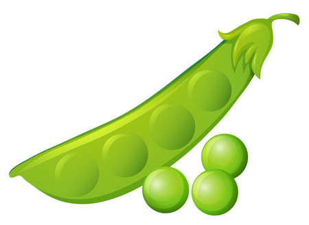in peas: Fresh peas and peapod  illustration Illustration