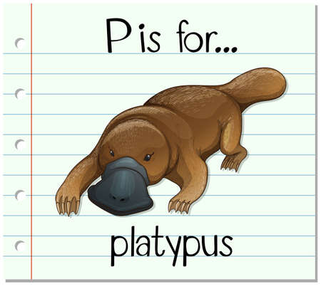 platypus: Flashcard letter P is for platypus illustration Illustration