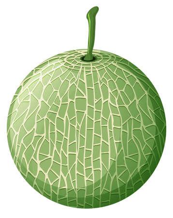 Fresh melon on white background illustration