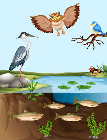 Aves y peces de estanque de la ilustración Ilustración de vector