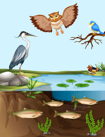 ponds: Birds and fish by the pond illustration