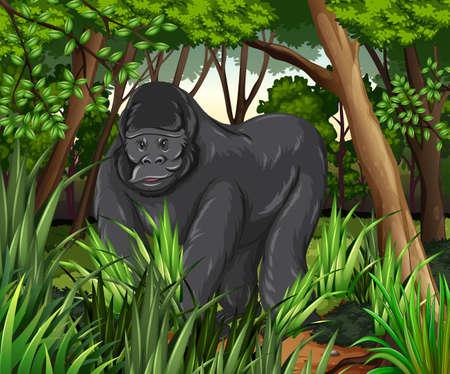 Gorilla living in the jungle illustration