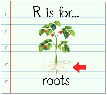 r image: Flashcard letter R is for roots illustration