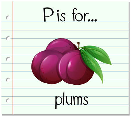 plums: Flashcard letter P is for plums illustration Illustration