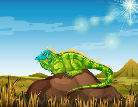 lizard in field: Wild lizard in the field illustration Vectores
