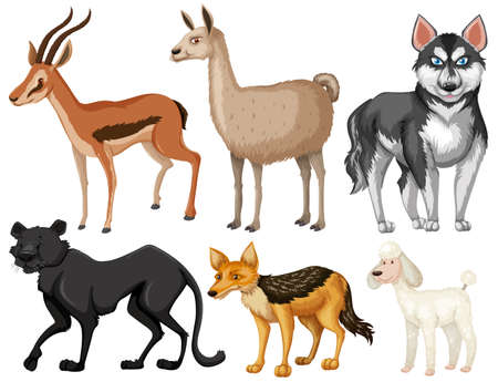 wildlife: Different kind of wildlife illustration