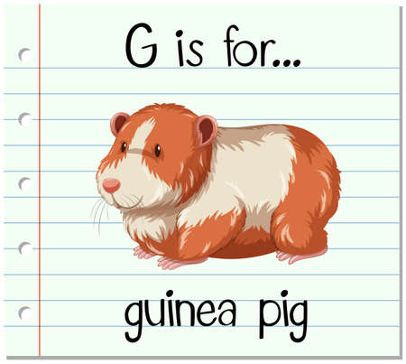 guinea pig: Flashcard letter G is for guinea pig illustration Illustration