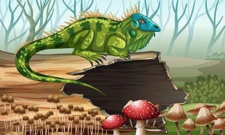 lizard in field: Iguana que se coloca en el registro de la ilustración