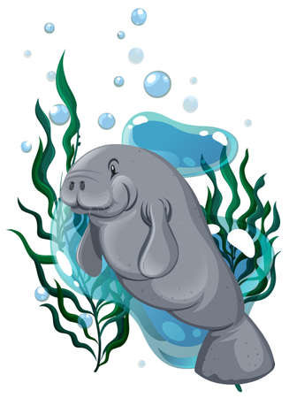 exotic fish: Seacow swimming in the ocean illustration