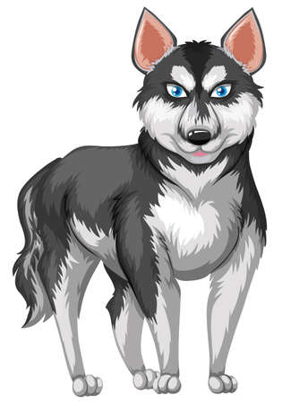 white fur: Siberian husky with black and white fur illustration