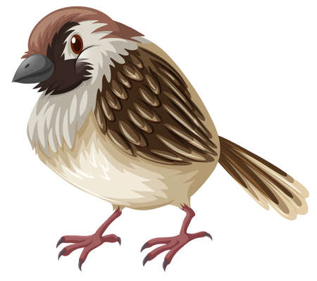 Little sparrow with brown feather illustration