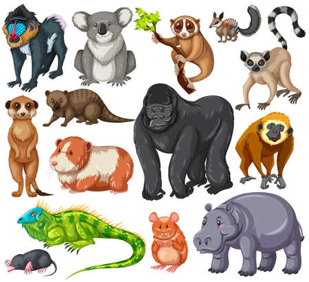 Different type of wildlife animals on white background illustration
