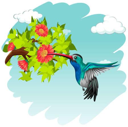tropical flower: Hummingbird flying around the flowers illustration Illustration